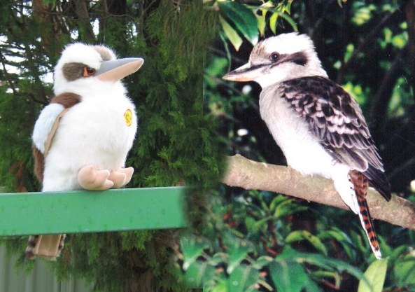 Laughing kookaburras - toy and real bird