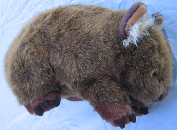 wombat picture 3